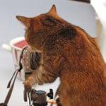 カメラ転売 商品撮影方法を公開!